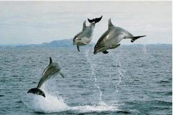 Observar/Nadar con delfines en 'Bay of Islands'