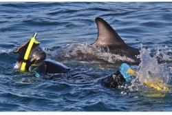 Nadar con delfines en Kaikoura